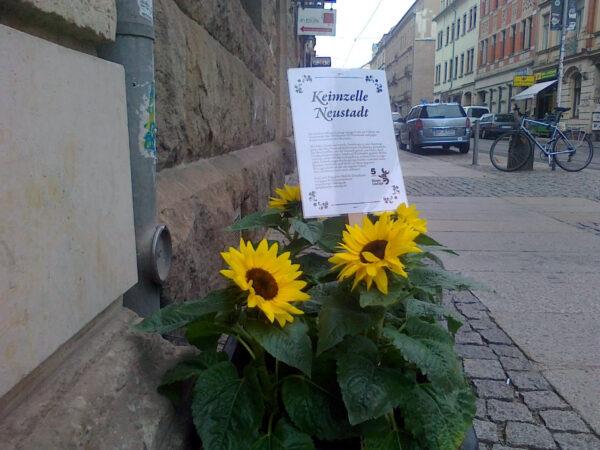 Sonnenblume auf der Görlitzer Straße