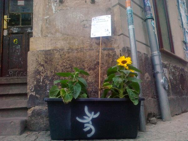 Sonnenblume vorm Hebedas