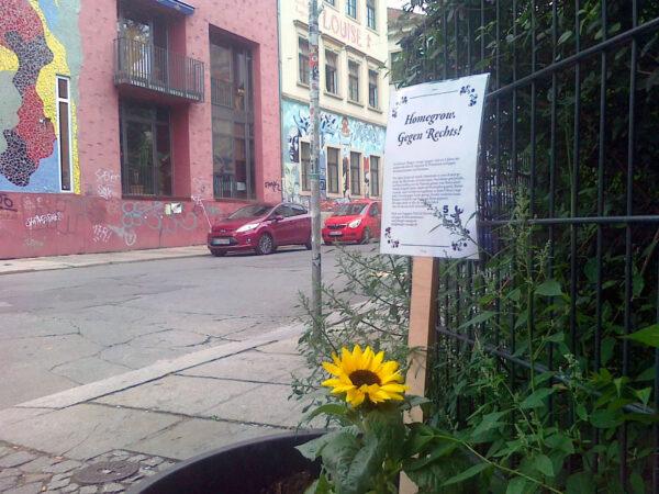 Sonnenblume neben Kathys Garage