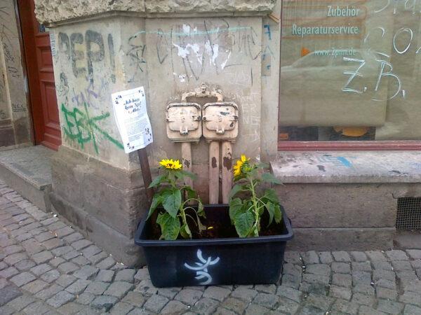 Sonnenblume vorm Musikhaus