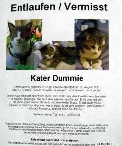 2011-09-20-Katze3