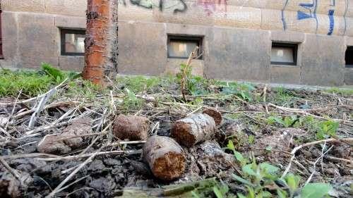 So soll es künftig nicht mehr aussehen - Baumscheibe auf der Schönfelder Straße