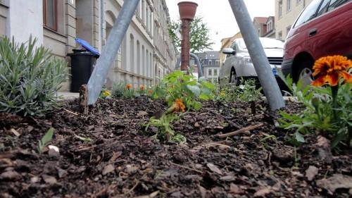Auf den Baumscheiben an der Schönfelder sind kleine Gartenwunderwerke entstanden.