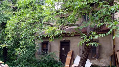 Verwilderter Hof in der Alaunstraße