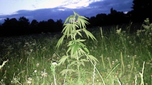 Der Alaunplatz kennt sich aus mit Cannabis, Foto: Archiv/2012