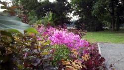 Blütenpracht auf dem Alaunplatz
