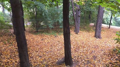 Herbst im Alaunwäldchen
