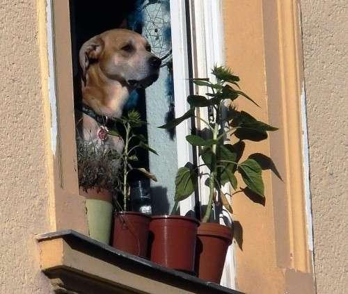 Der aufmerksame Beobachter sorgt für mehr Sicherheit im Viertel.