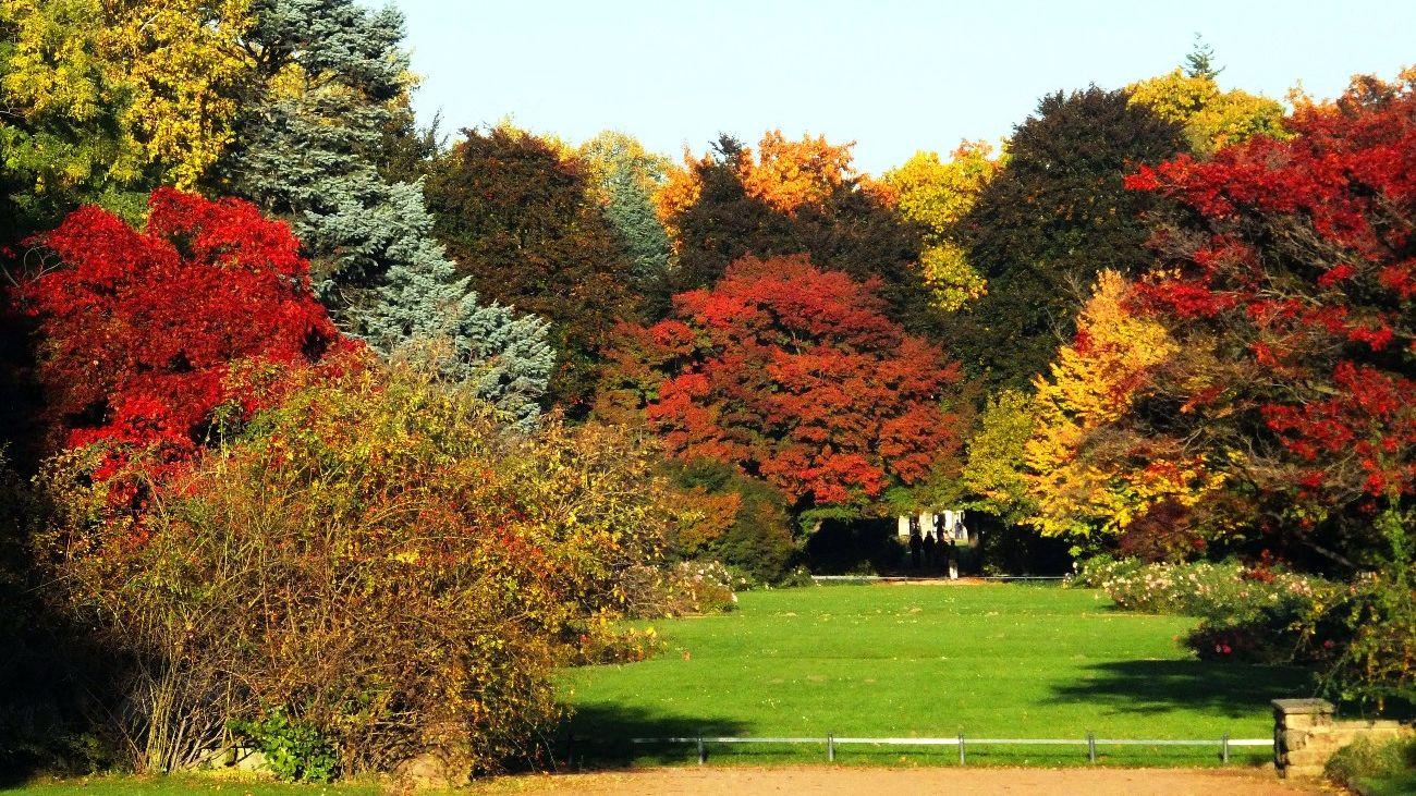 Der Herbst von seiner schönsten Seite  NeustadtGeflüster