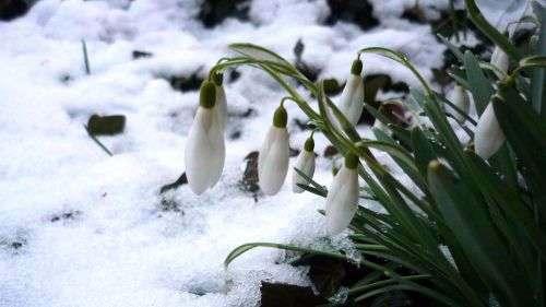 dem Frühling fehlt's leider erneut an Revier