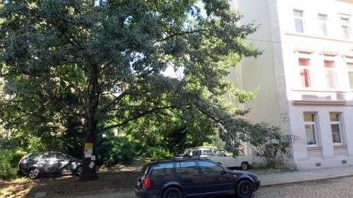 Parkplatz im Schatten des Baumes
