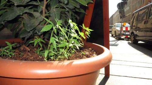 kleine Zierpflanze