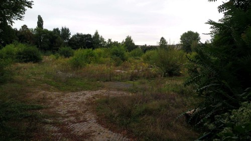 Der Russensportplatz von Westen gesehen.