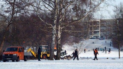 Schneidarbeiten auf dem Alaunplatz