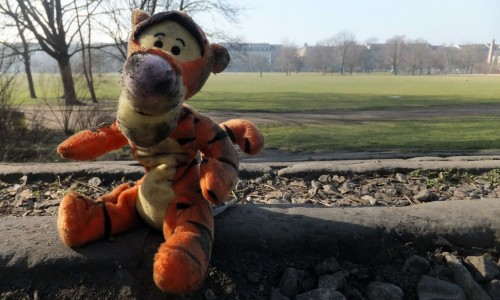 Müll-Tiger am Alaunaplatz