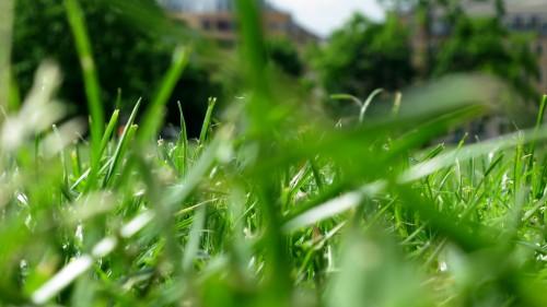Im Gras auf dem Alaunplatz lümmeln und dem Calefax Reed Quintet lauschen.