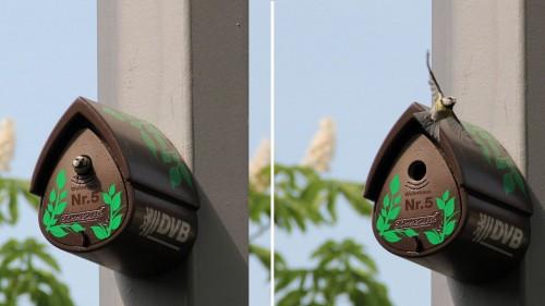 Bewohntes Vogelhaus auf der Bautzner Straße - Foto: DVB