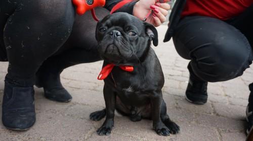 PARTEIhund Mogli