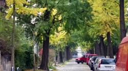 Trotz Herbst noch erstaunlich grün: die Bachstraße