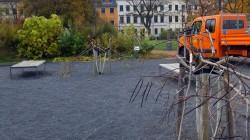 Kaputte Bäume am Alaunplatz