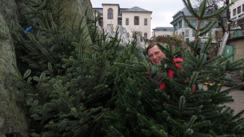 Hellmich inmitten seiner Weihnachtsbäume
