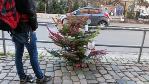 Fichte ohne Weihnachtsschmuck