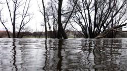 Die Bäume an der Prießnitzmündung stehen im Wasser.