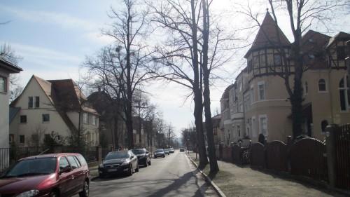 Blick auf die Angelikastraße. Lange Schatten, schmale Bäume