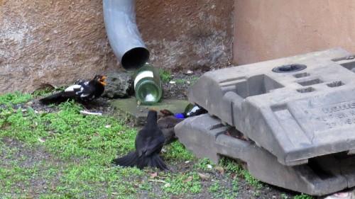 Drei Vögel und eine Weinflasche.