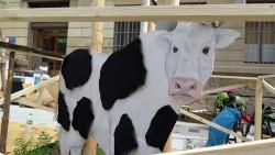 Am Saloon auf der Martin-Luther-Straße steht ne falsche Kuh.