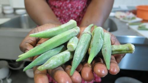 Okra-Schoten: schmackhaft und gar nicht so scharf
