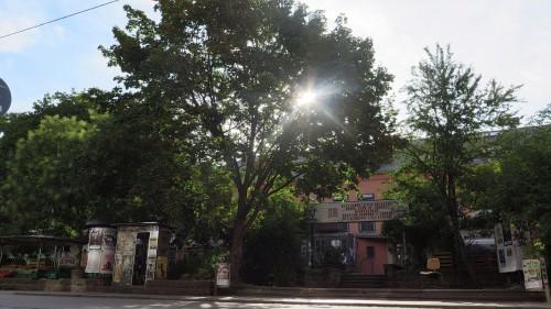 Inzwischen ein historisches Foto, der große Ahorn vor der Scheune aufgenommen Ende August.