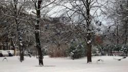 Schnee-Tauben am Alaunplatz