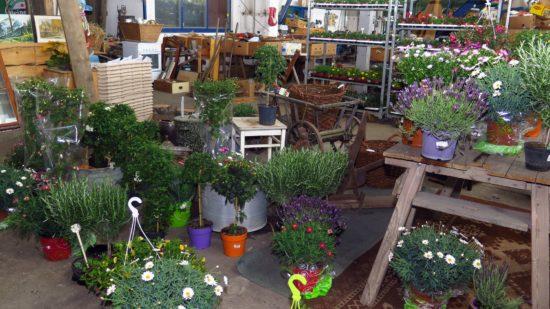 Die Trödelhalle hat der Chef jetzt mit Pflanzen und Blumen vollgestellt.