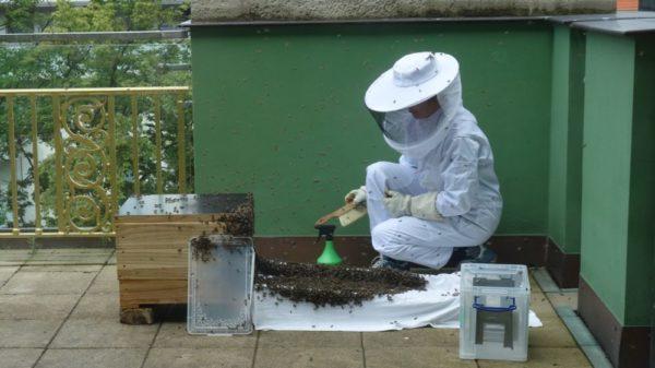 Auch hier wurden die Bienen wieder eingsprüht.