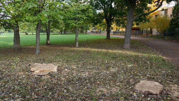 An der Kita sind zwei Bäume gefallen.