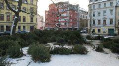 Weihnachtsbaumlagerstelle am Morgen nach dem Brand