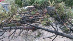 Nur ein kleiner Teil der Bäume zeigt Brandspuren.