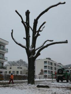 Im ersten Schritt wurden die kleinen Zweige und Ästchen entfernt.