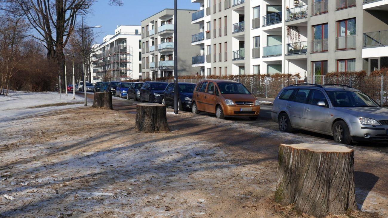 Tannenstraße ohne Ahorn-Bäume