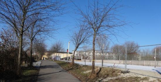 Bereits gelb markiert sind die Bäume, die jetzt der neuen Fernwärmetrasse weichen müssen. Foto: W. Schenk
