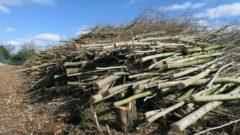 Bäume und Sträucher wurden gerodet.