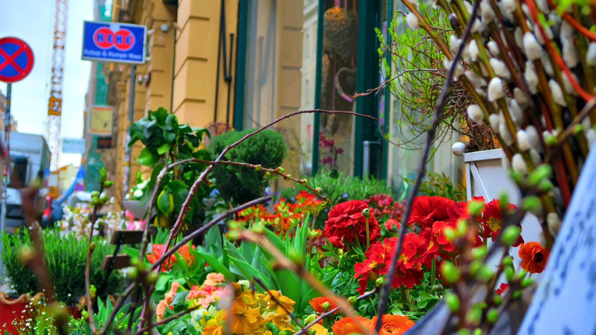 Blümchen auf der Louisenstraße