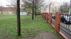 Die Bäume, darunter auch eine schon etwas ältere Eiche müssen dem Neubau weichen. Neue Bäume sollen gesetzt werden.