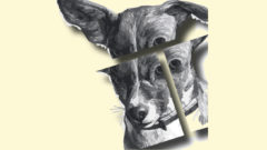 Dogs, Bones and Catering