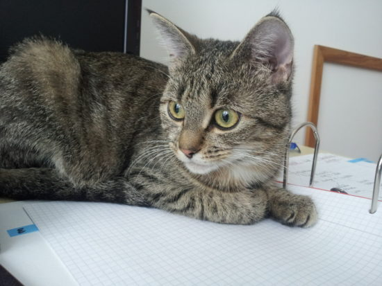 Katze Frieda