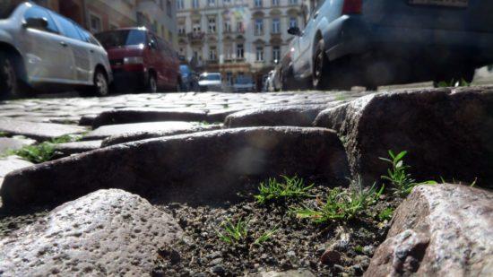 Kleine Büsche auf der Jordanstraße