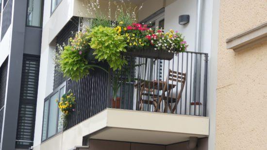 Balkonsommer auf der Tieckstraße