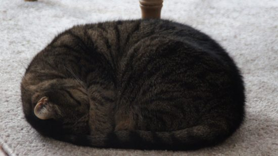 """""""Für die Katze ist es jetzt schwer in der Wohnung. In meiner alten konnte sie raus."""""""
