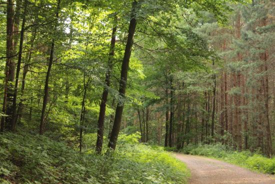 Dieser Wald hat schon viel erlebt.